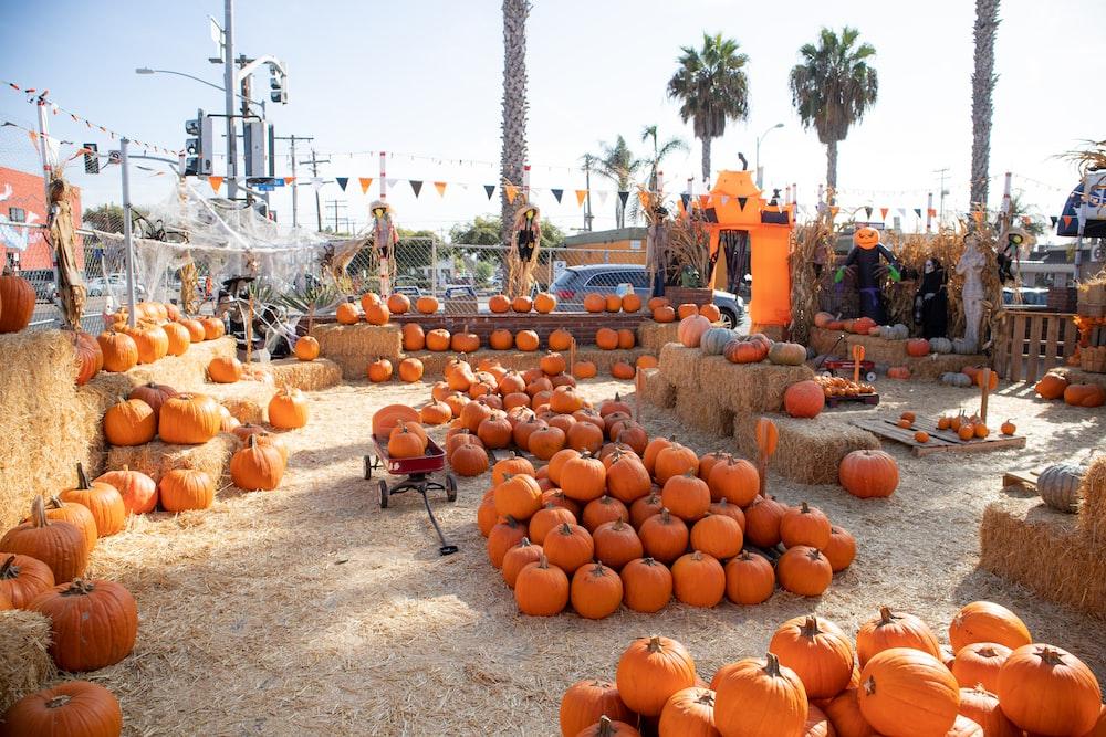 pumpkins on black steel stand