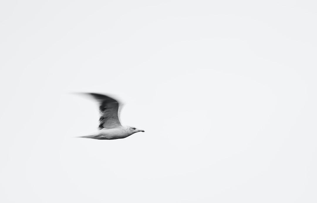 Fly. - unsplash