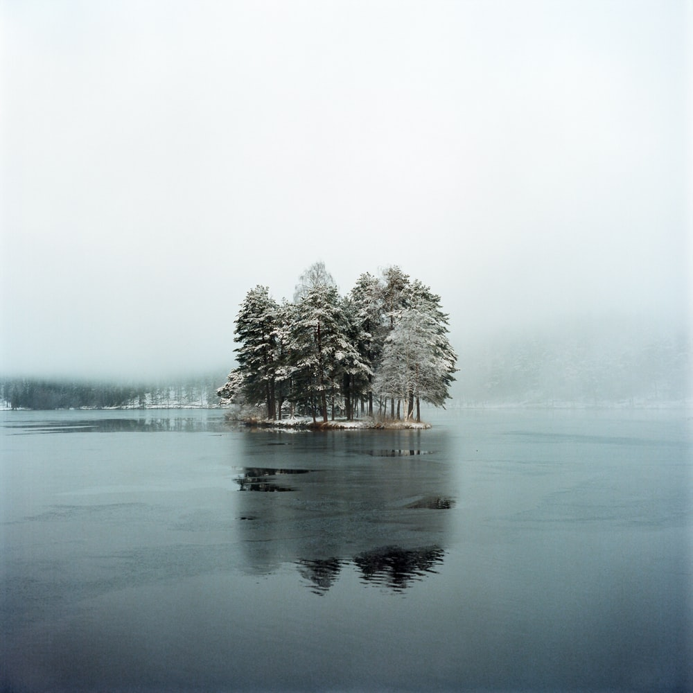 brown tree on body of water during foggy weather