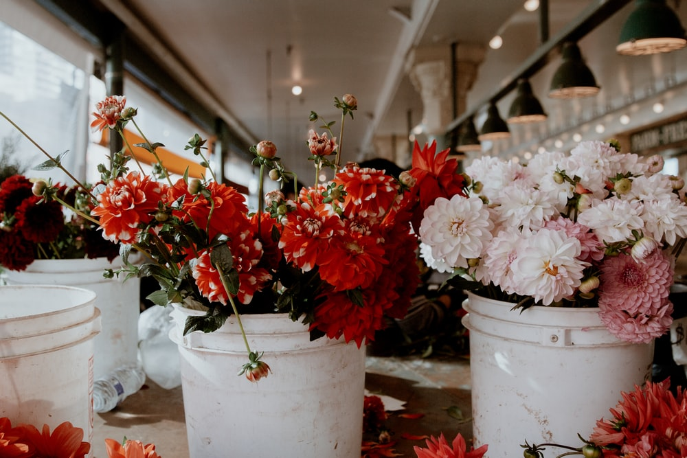 red and white flowers in white ceramic vase