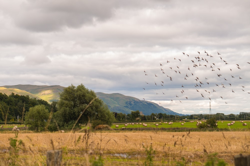 birds flying over green trees and mountains during daytime