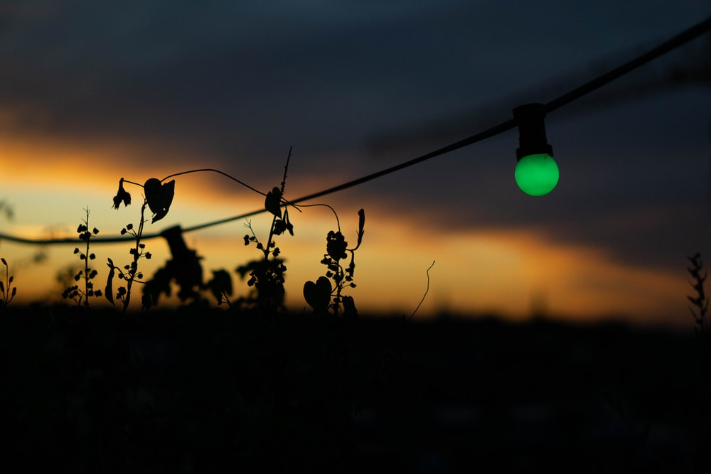 silhouette of plants during sunset