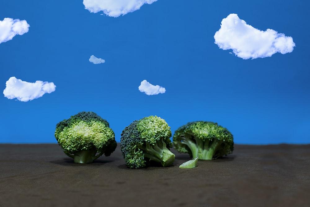 green broccoli under blue sky during daytime