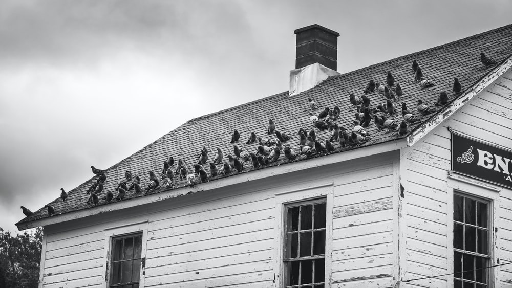 grayscale photo of white wooden house