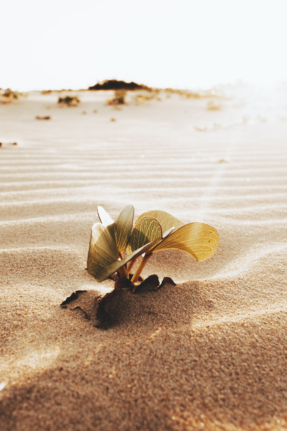 brown and white butterfly on brown sand during daytime