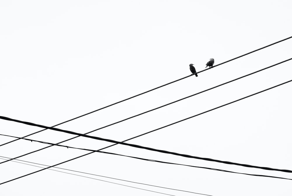 birds on electric wire during daytime