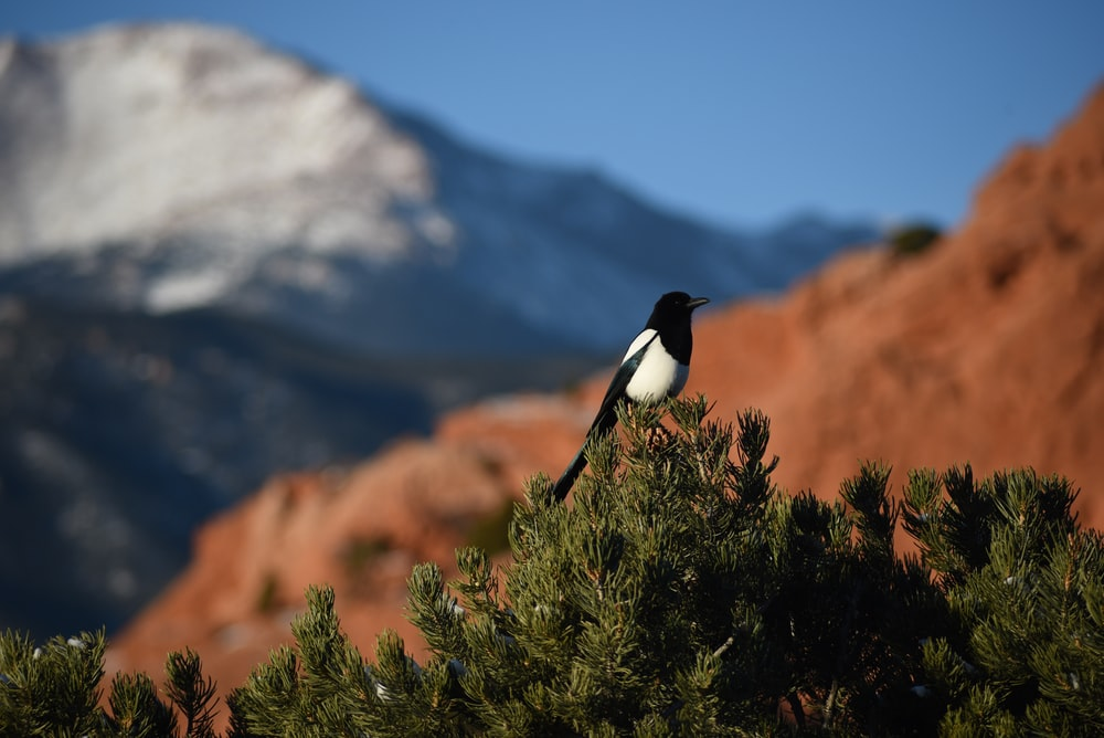 black and white bird on green grass during daytime