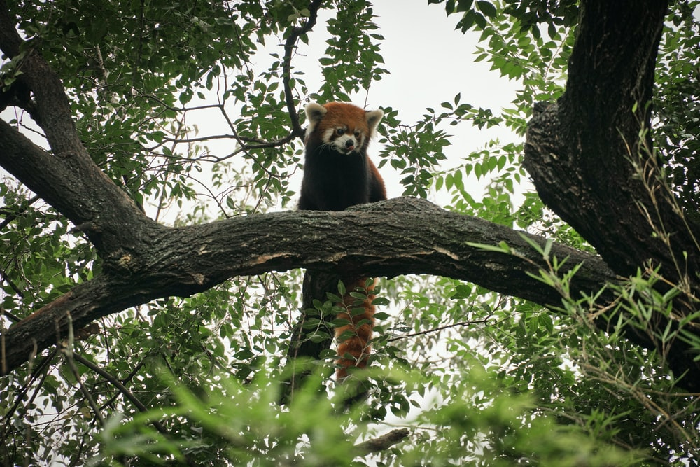 brown and white fox on tree branch during daytime