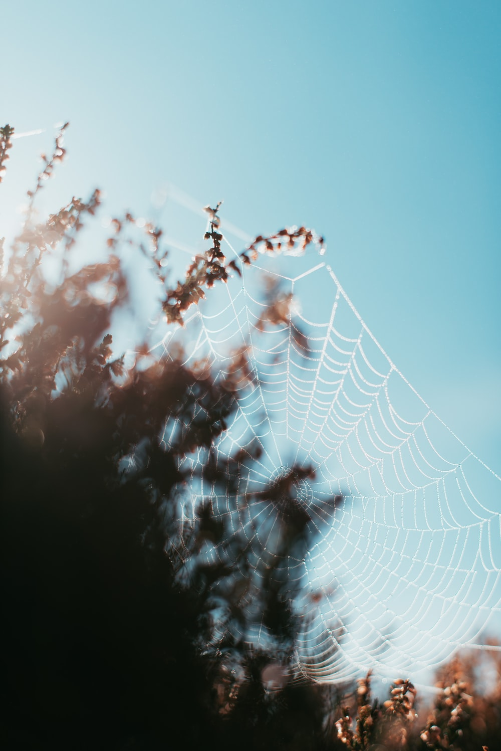 spider web on brown and white clouds during daytime