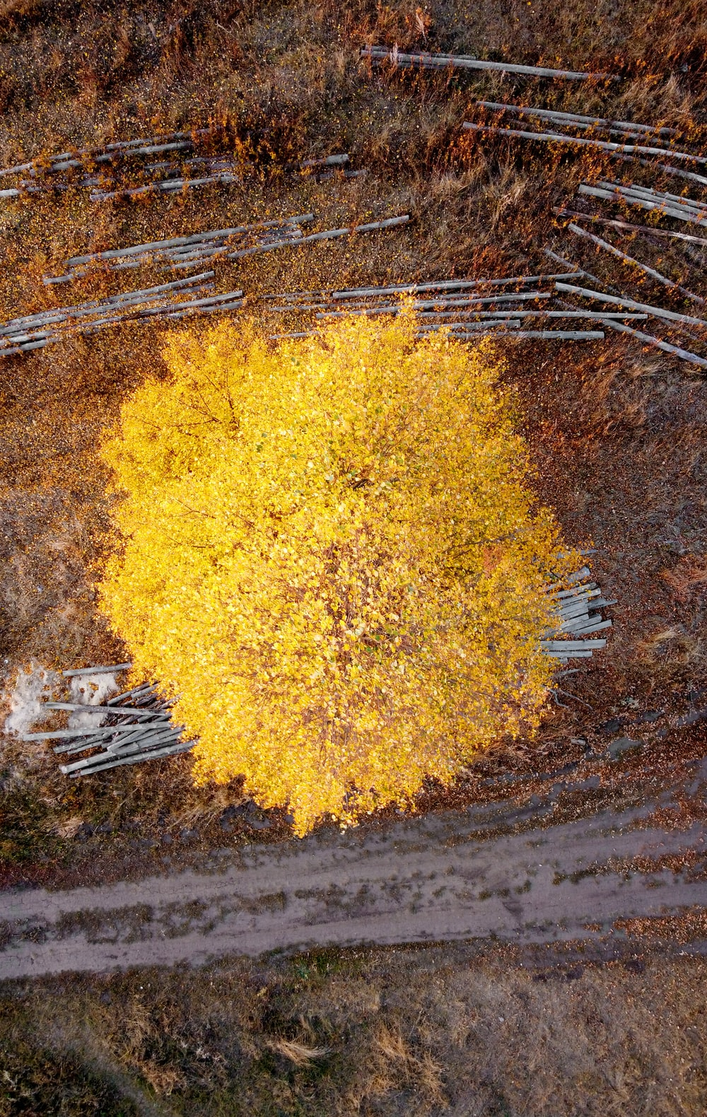yellow leaves on brown soil