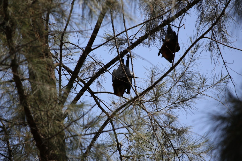 black bird on bare tree during daytime