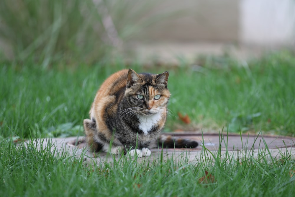 brown black and white cat on green grass during daytime