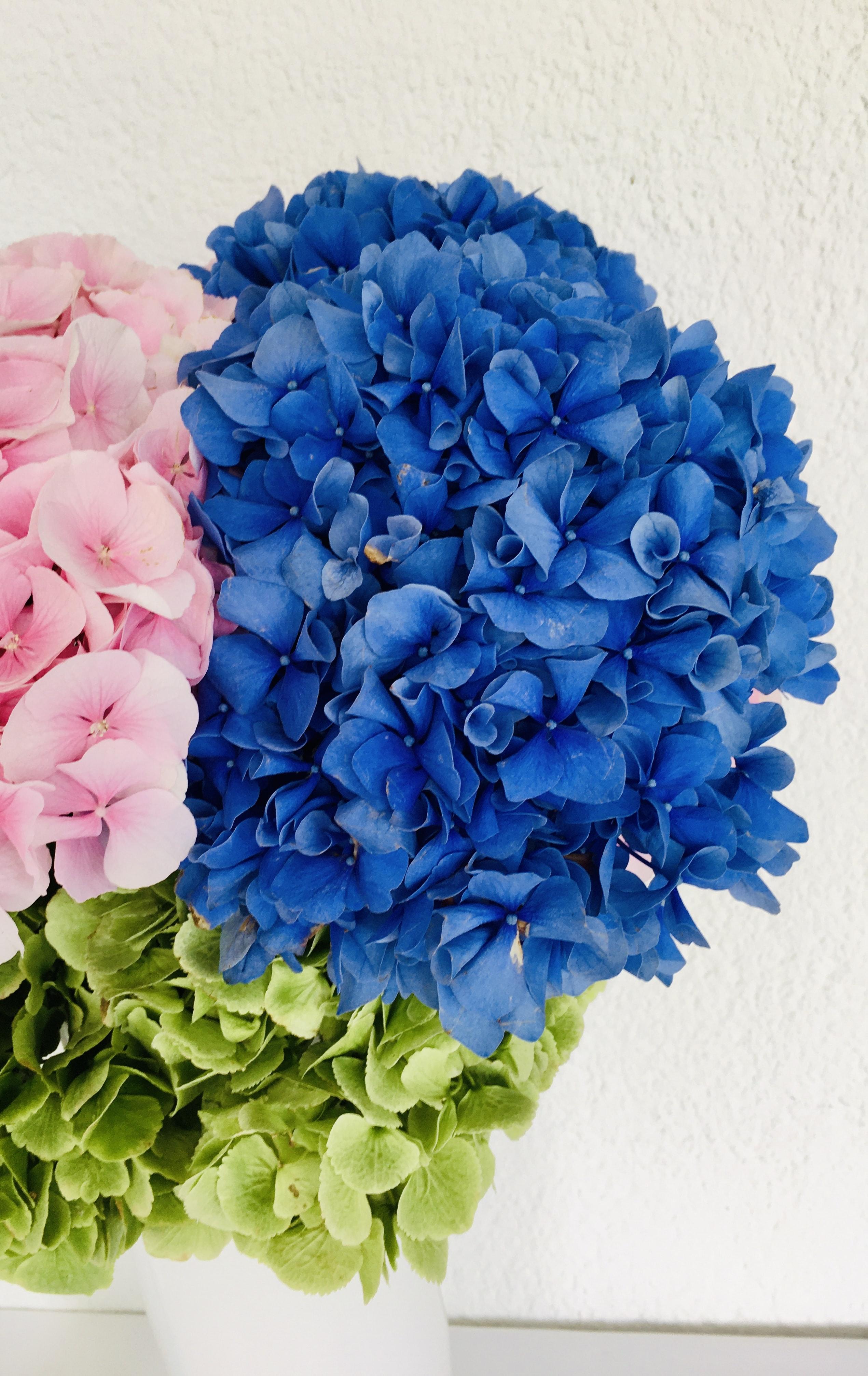 Blue Flower Bouquet On White Table Photo Free Flower Image On Unsplash