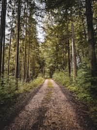 Inward Retreat nature stories