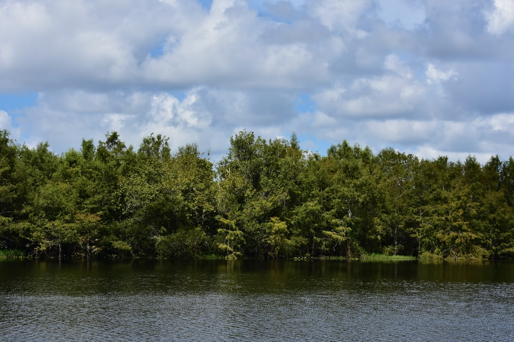green trees beside body of water under cloudy sky during daytime