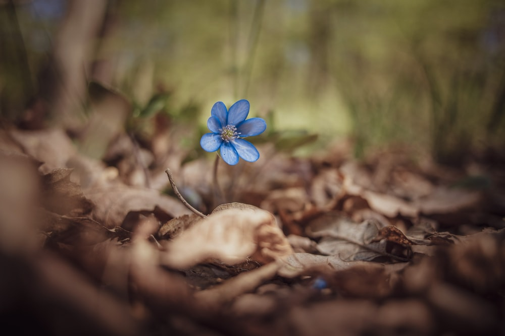 blue flower on brown dried leaves
