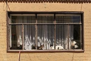 """""""Hay Cuatro Gatos"""""""