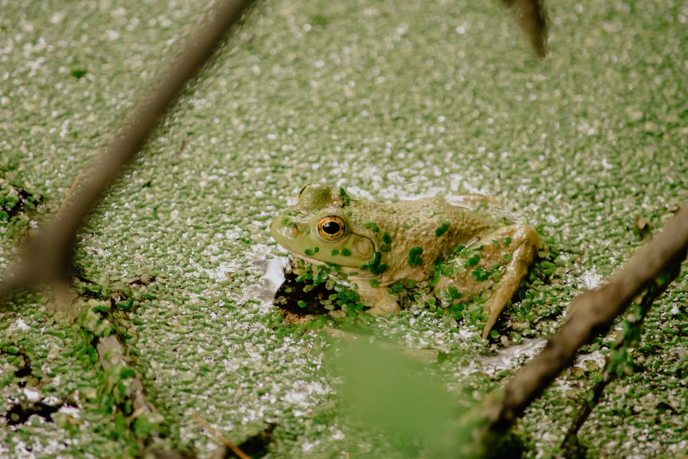 green frog on green moss