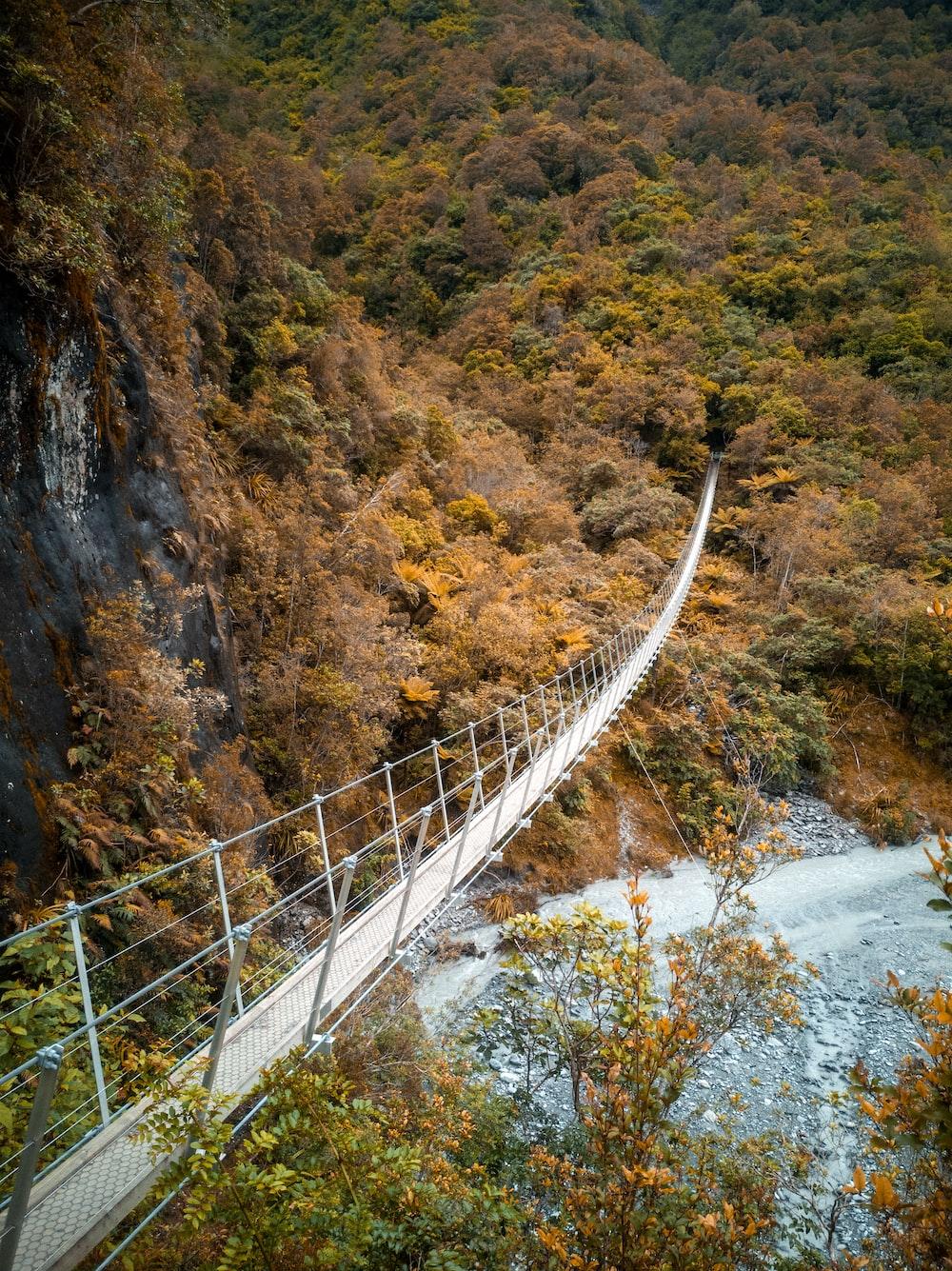 white bridge over river between trees