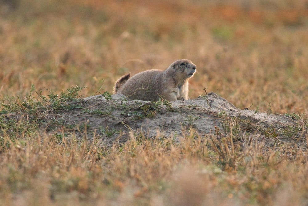 gray rodent on gray rock during daytime