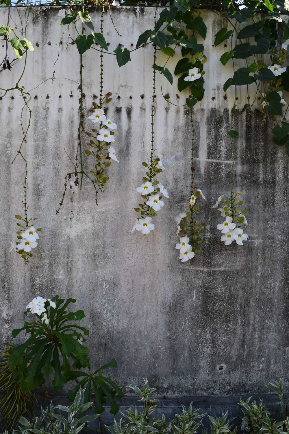 white and yellow flowers on gray textile