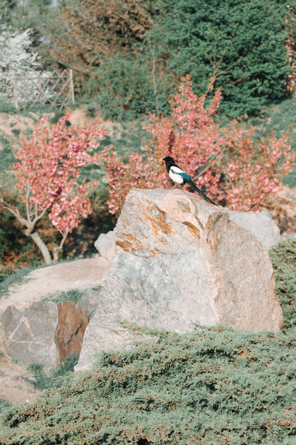 black and white bird on gray rock