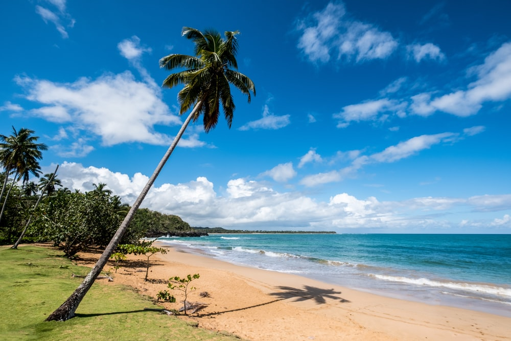 coconut tree on beach shore during daytime