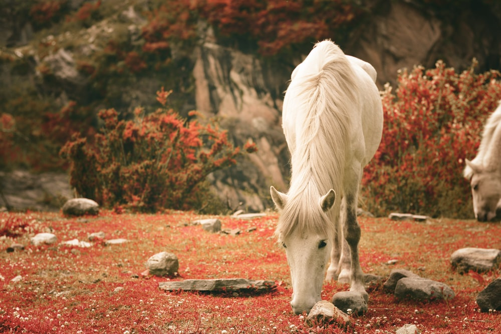 white horse eating red leaves during daytime