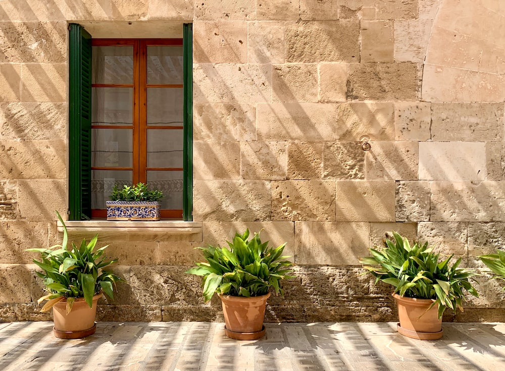 green potted plant beside brown wooden window