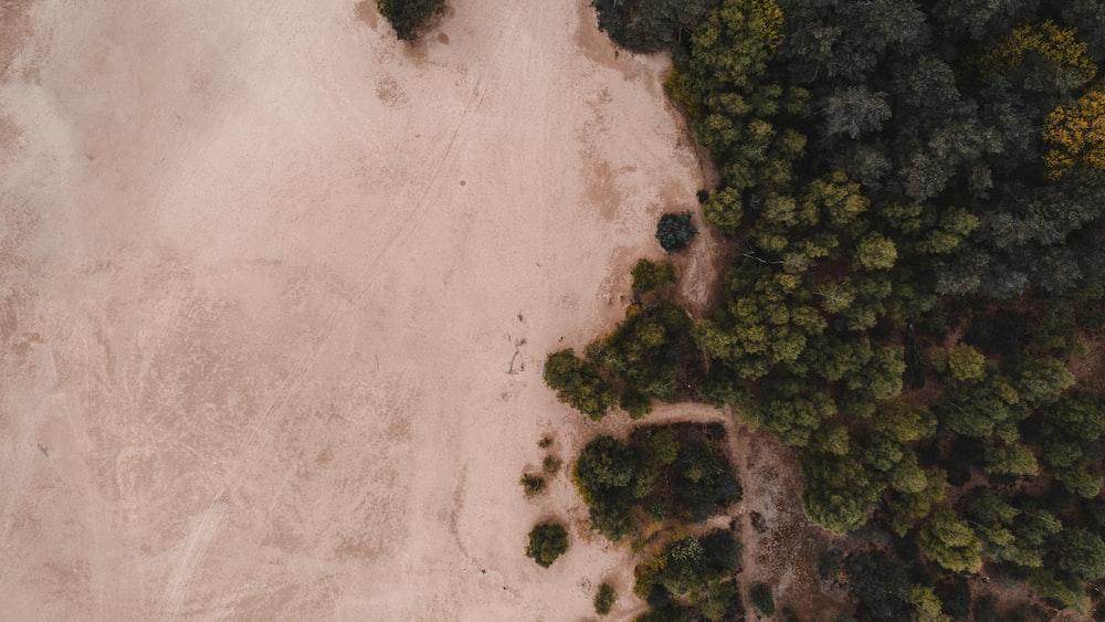 green trees on white sand