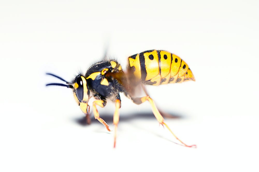 yellow and black bee on white surface