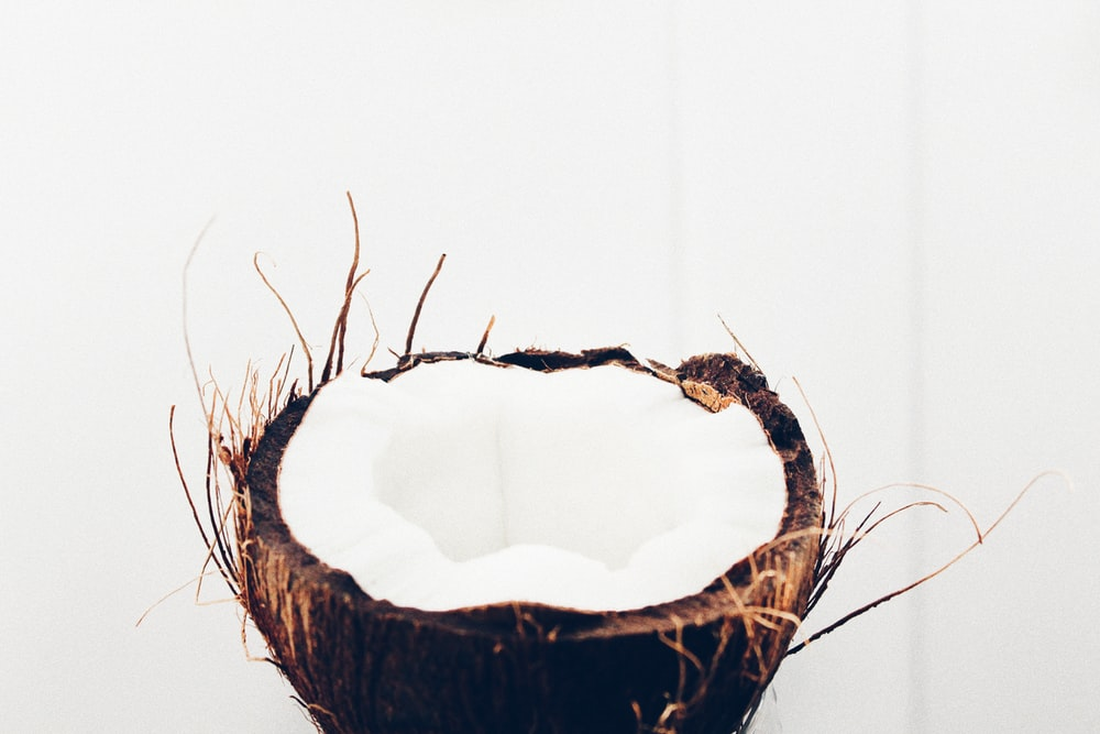 brown and black bird nest