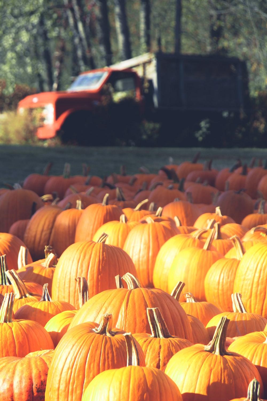 orange pumpkins on brown wooden surface