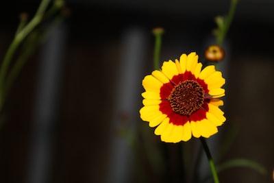 yellow flower in tilt shift lens suriname teams background