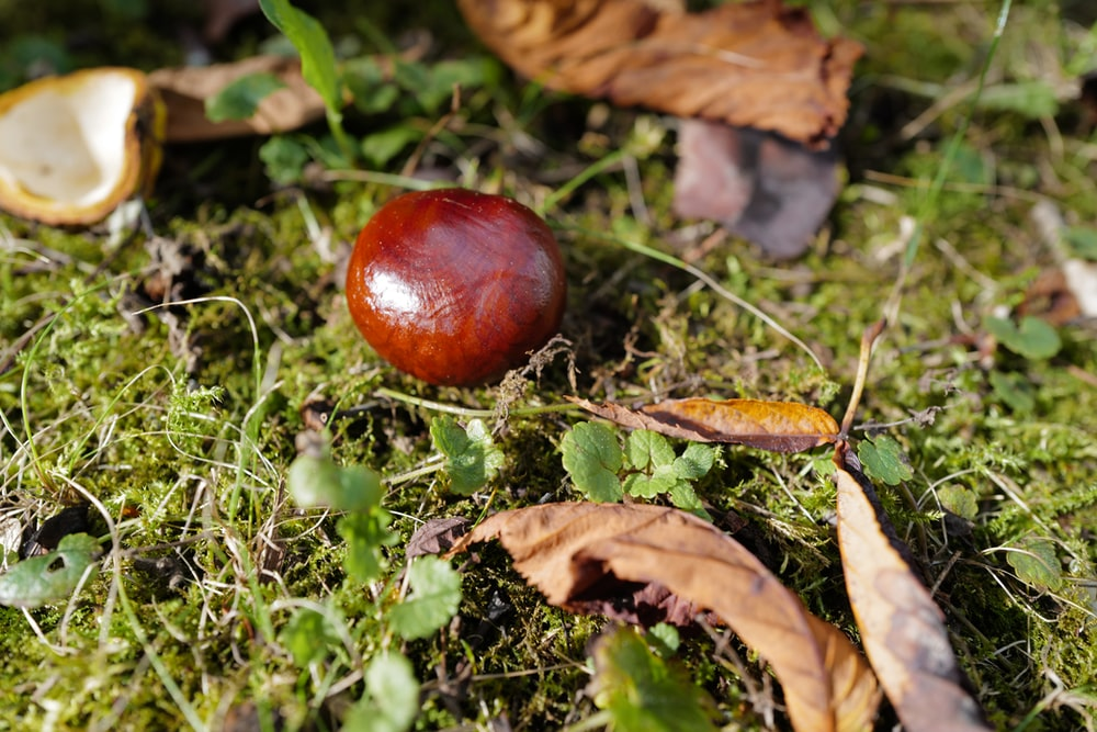 brown and red round fruit on green grass