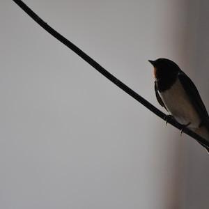 black and white bird on black wire