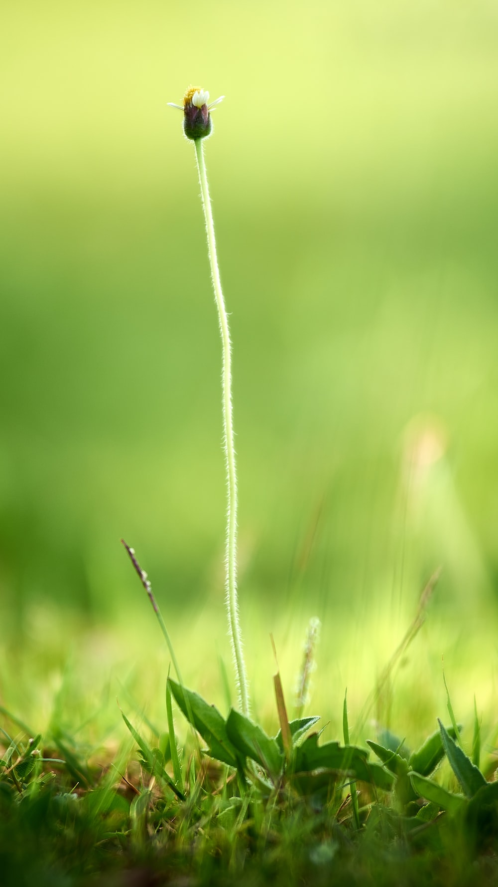 white rope on green grass during daytime