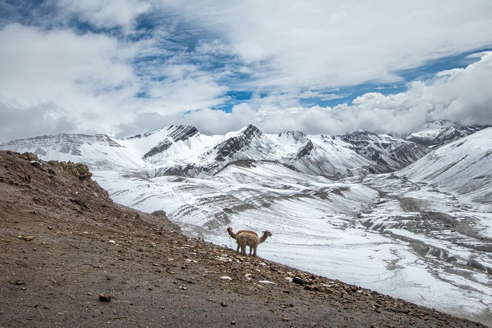 brown deer on brown field near snow covered mountain under white clouds and blue sky during