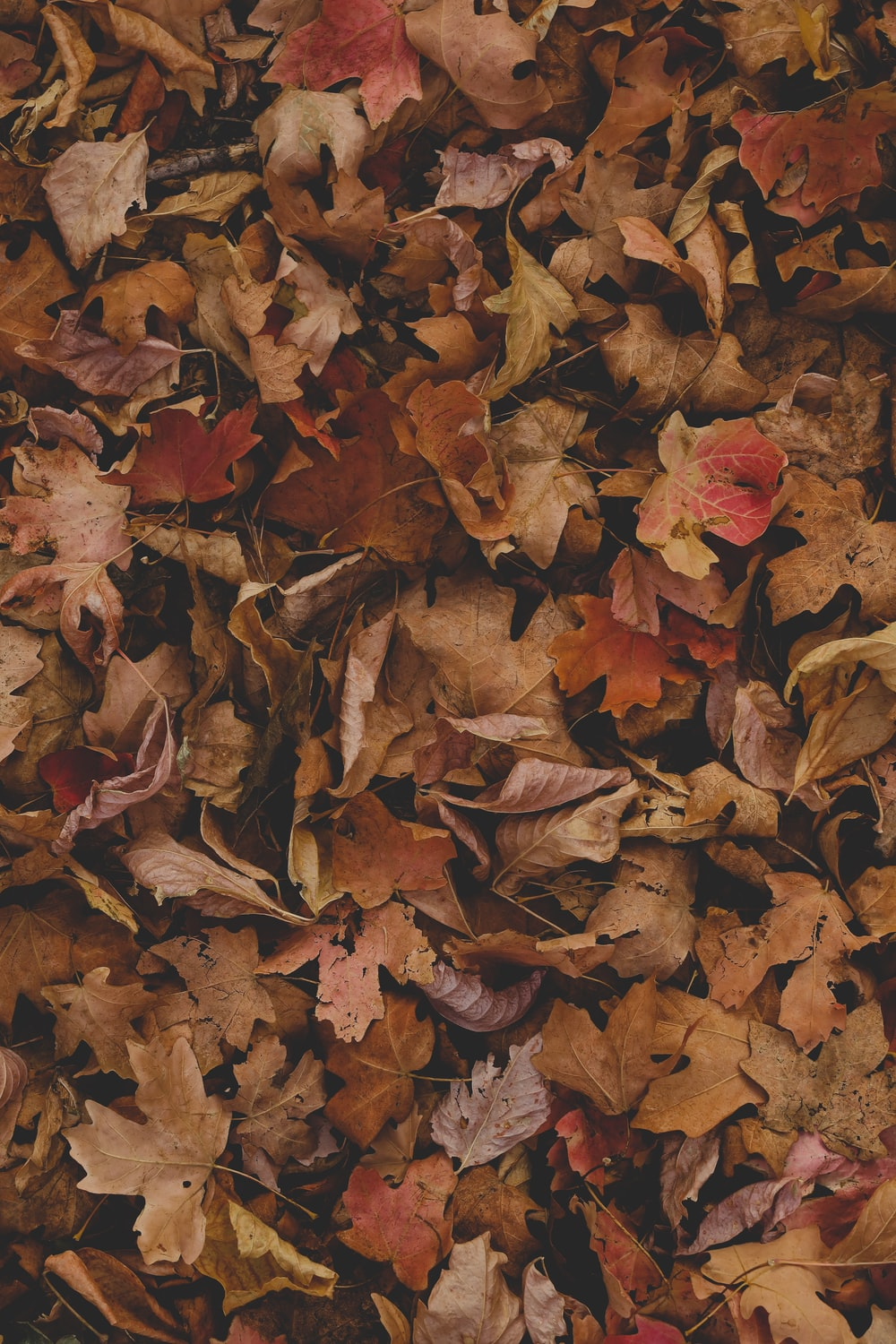 red and brown leaves on ground