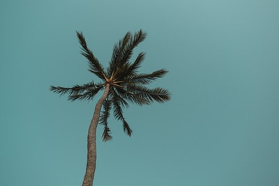 green palm tree under blue sky during daytime palm-tree zoom background