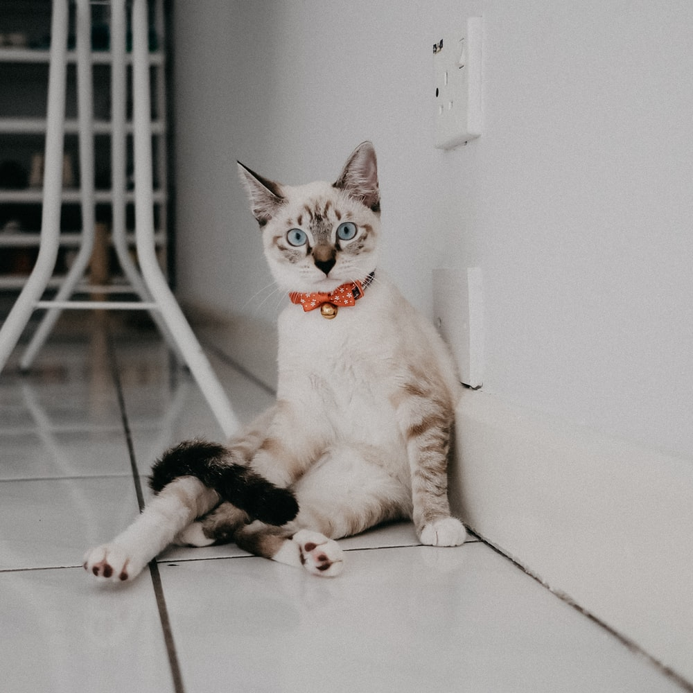 white and brown cat on white floor tiles