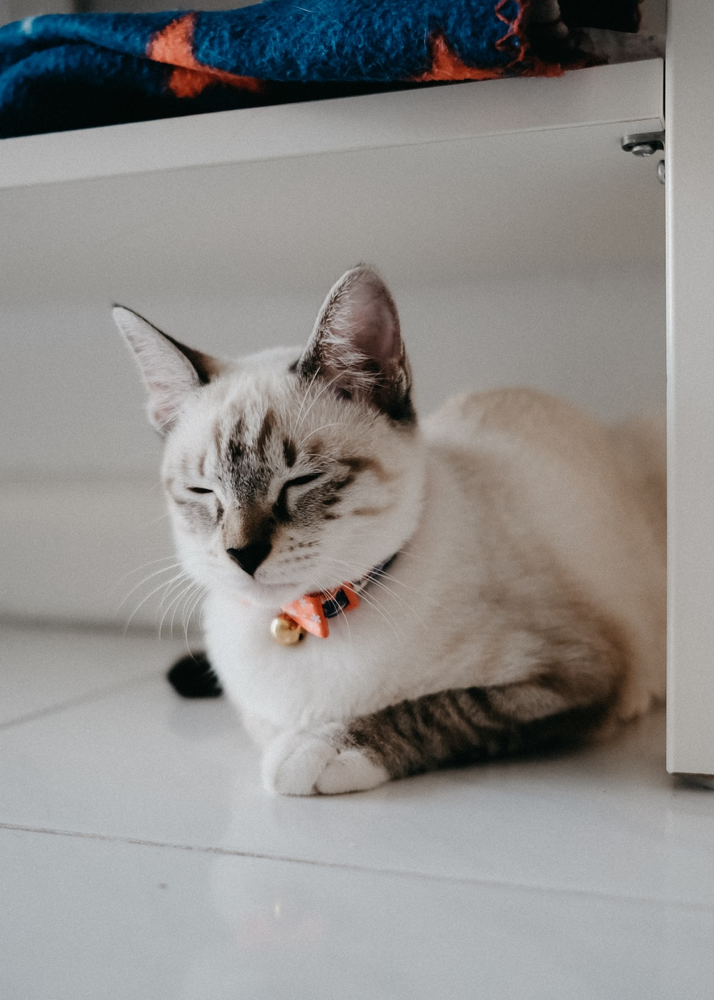 white and brown cat lying on white floor