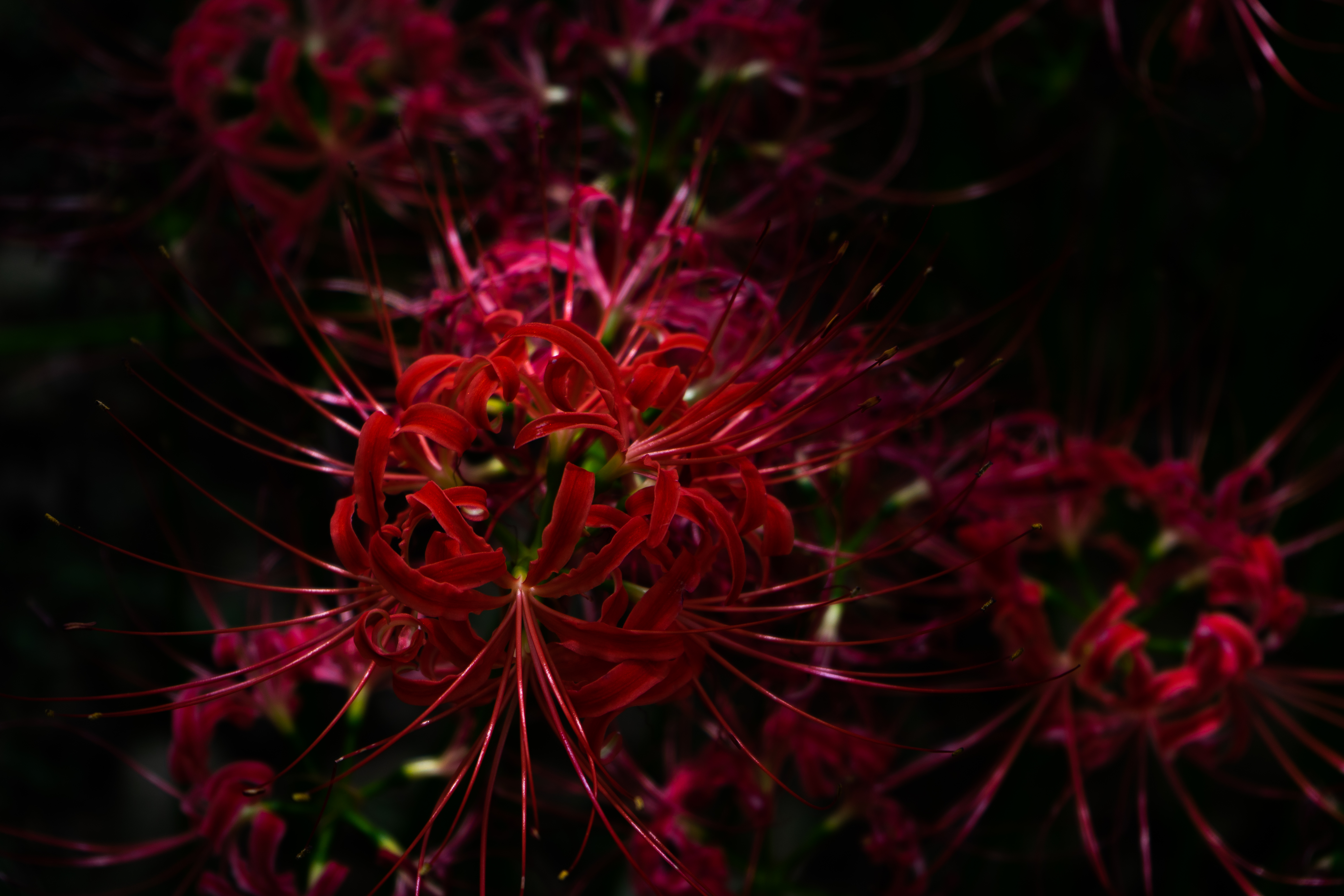 red and green plant in close up photography