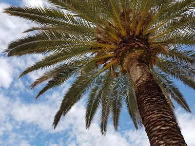 palm-tree teams background