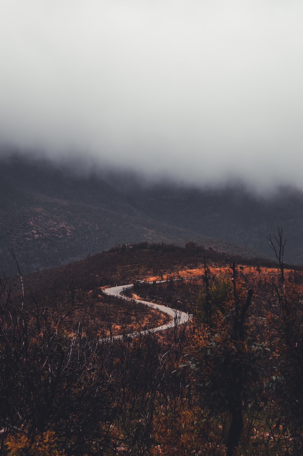 brown trees on mountain during foggy day