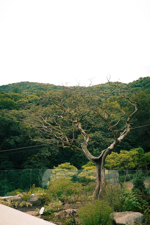 green trees near green grass field during daytime