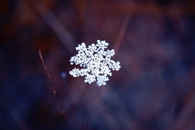 white flower in tilt shift lens snowflake teams background