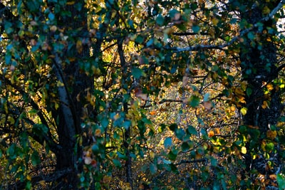 green and yellow leaves on tree leafy teams background