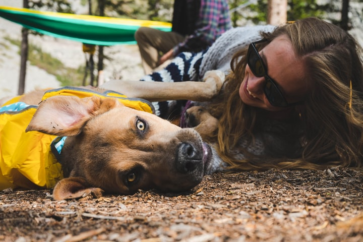 5 Simple Tips on Being an Amazing Pet Sitter, Who Also Makes Good Money