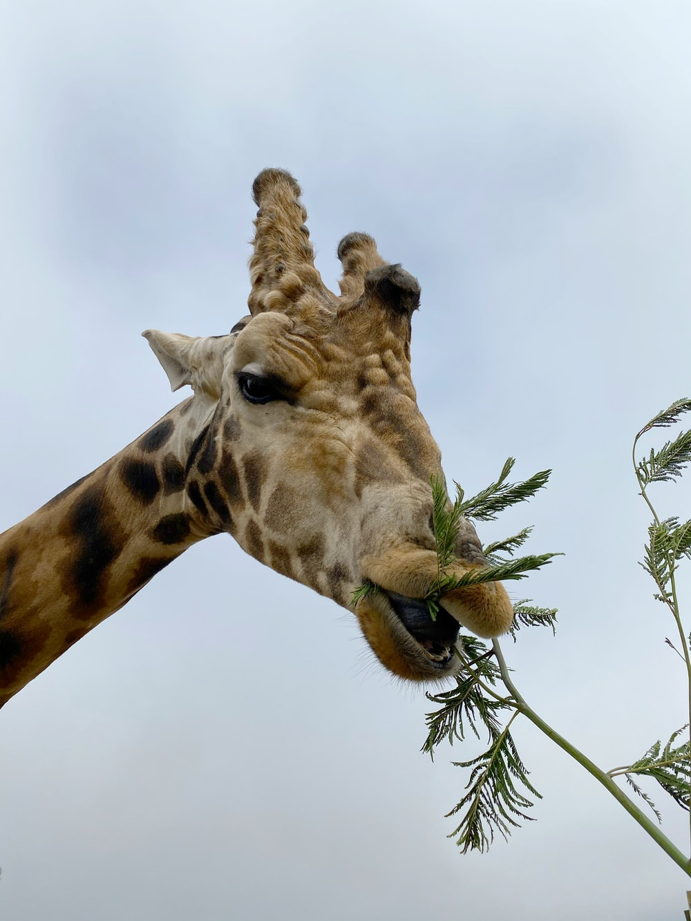giraffe under white cloudy sky during daytime